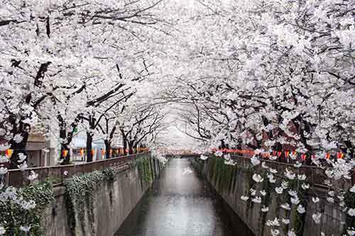 12-magical-pictures-Sakura-Blossom-in-Japan-in-2016-Part-1-Artnaz-Com-2