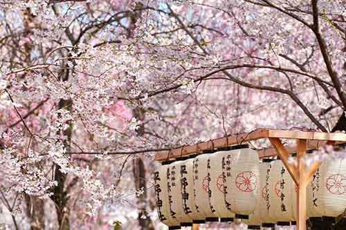 12-magical-pictures-Sakura-Blossom-in-Japan-in-2016-Part-1-Artnaz-Com-3