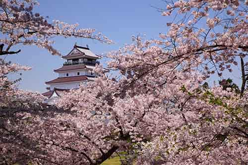 12-magical-pictures-Sakura-Blossom-in-Japan-in-2016-Part-1-Artnaz-Com-7