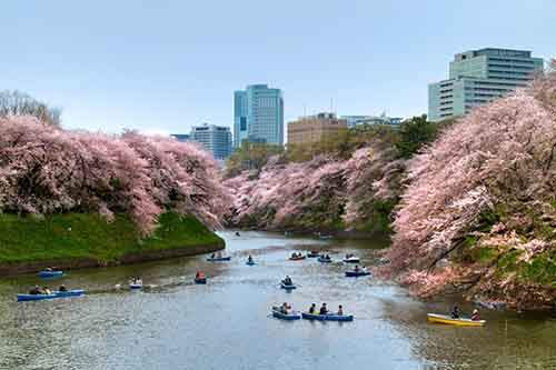 12-magical-pictures-Sakura-Blossom-in-Japan-in-2016-Part-1-Artnaz-Com-8