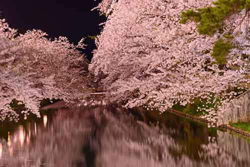 12-magical-pictures-Sakura-Blossom-in-Japan-in-2016-Part-1-Artnaz-Com-9
