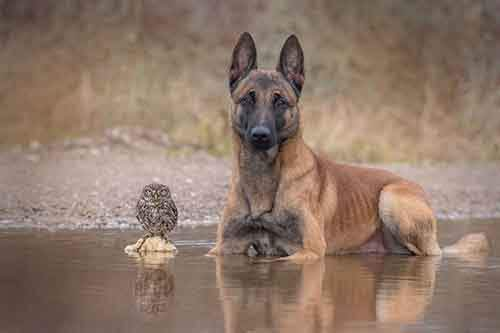 557455-900-1458032069-ingo-else-dog-owl-friendship-tanja-brandt-14