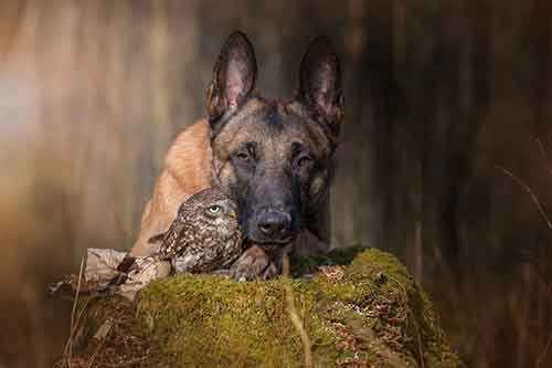 557505-900-1458032069-ingo-else-dog-owl-friendship-tanja-brandt-2
