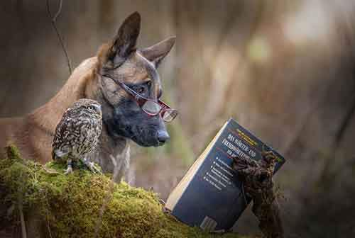 http://mixstuff.ru/wp-content/uploads/2016/03/557555-900-1458032069-ingo-else-dog-owl-friendship-tanja-brandt-12.jpg