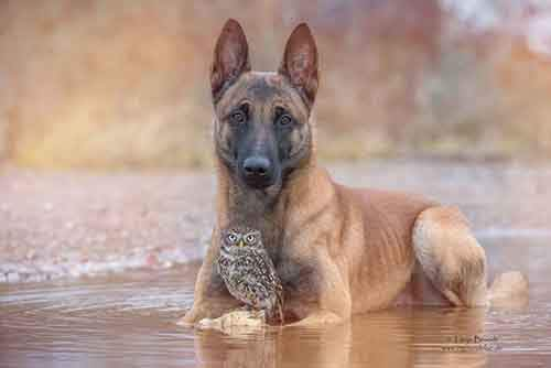 557605-900-1458032069-ingo-else-dog-owl-friendship-tanja-brandt-11