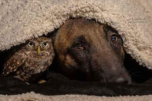 557655-900-1458032069-ingo-else-dog-owl-friendship-tanja-brandt-10-1