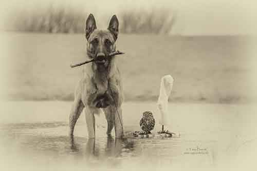 557705-900-1458032069-ingo-else-dog-owl-friendship-tanja-brandt-3