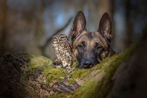 http://mixstuff.ru/wp-content/uploads/2016/03/557755-900-1458032069-ingo-else-dog-owl-friendship-tanja-brandt-4.jpg