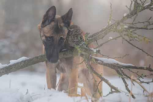 557855-900-1458032069-ingo-else-dog-owl-friendship-tanja-brandt-9