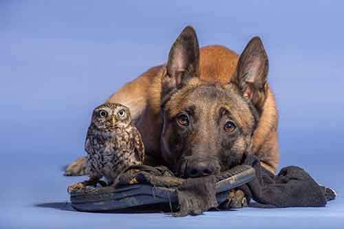 557905-900-1458032069-ingo-else-dog-owl-friendship-tanja-brandt-7