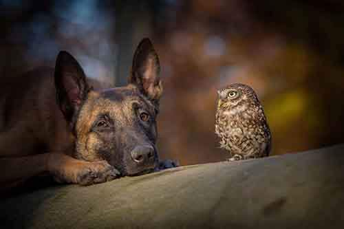 557955-900-1458032069-ingo-else-dog-owl-friendship-tanja-brandt-6