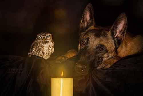 http://mixstuff.ru/wp-content/uploads/2016/03/558055-900-1458032069-ingo-else-dog-owl-friendship-tanja-brandt-1.jpg