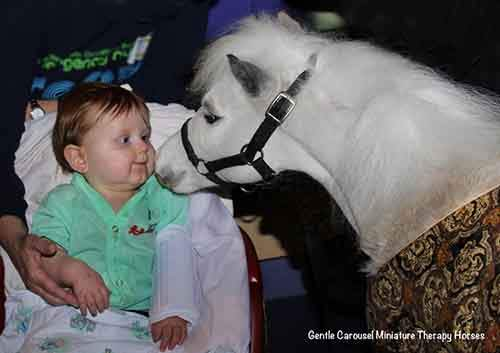 Miniature-therapy-horses-boy