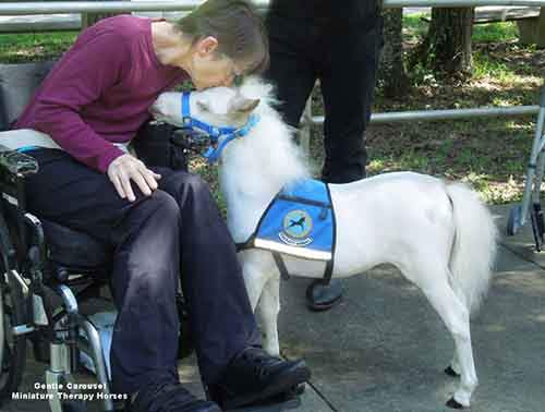 Miniature-therapy-horses-kisses