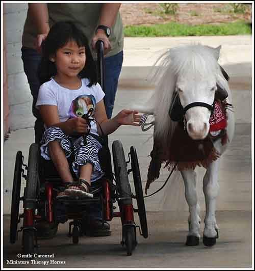 Miniature-therapy-horses-leading