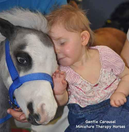 Miniature-therapy-horses-nuzzle