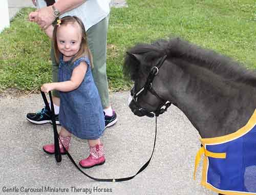 Miniature-therapy-horses-pink-boots