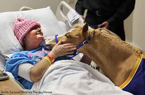 Miniature-therapy-horses-pink-hat