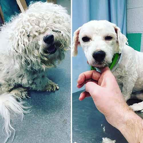 barber-gives-free-haircuts-shelter-dogs-mark-imhof-16