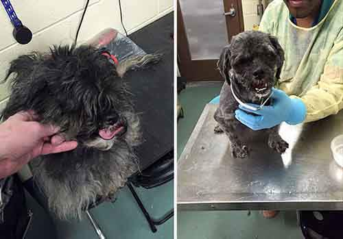 barber-gives-free-haircuts-shelter-dogs-mark-imhof-43