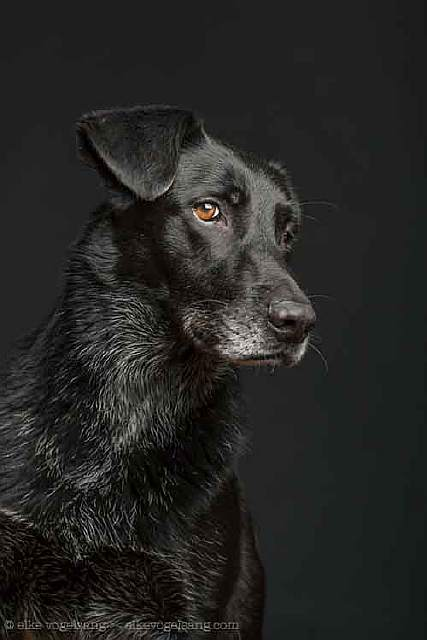 dogs-questioning-the-photographers-sanity-2__605