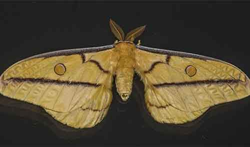 first computer bug was an actual moth