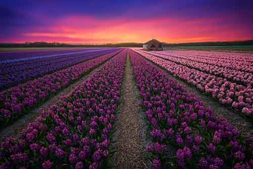 my-home-the-netherlands-in-40-beautiful-photos-26__880