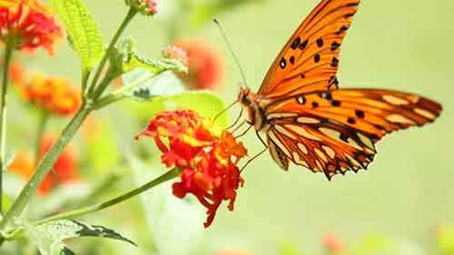 flowers-insects-Butterflies-google plus cover photos- 2120x1192