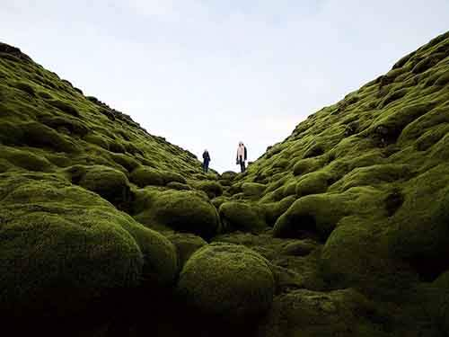 mossy-lava-iceland_94435_990x742