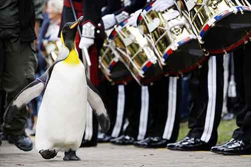 nils_olav_penguin_knighted01