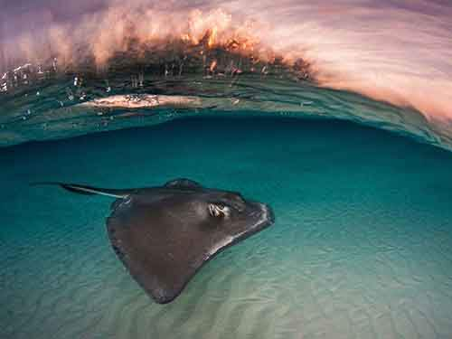 stingray-sandbar-sunrise_94568_990x742