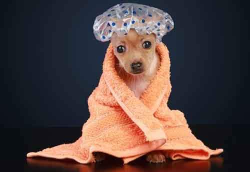 Dogwithshowercap2-610x420