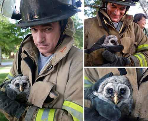 firefighters-rescuing-animals-saving-pets-12-5729aa9c8aa4b__605