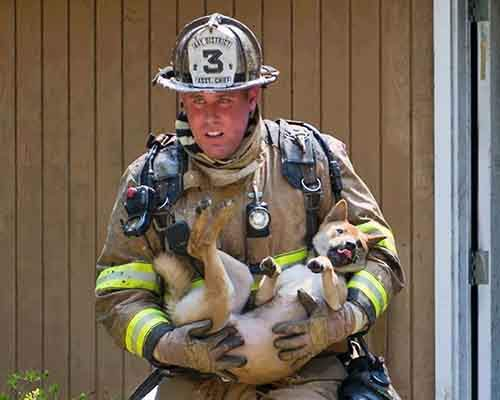 firefighters-rescuing-animals-saving-pets-18-5729da9ca8794__605