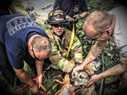 firefighters-rescuing-animals-saving-pets-20-5729dfcada012__605