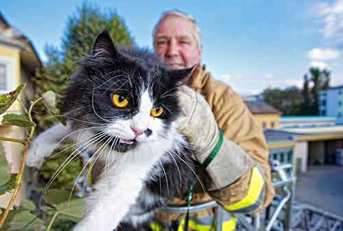 firefighters-rescuing-animals-saving-pets-22-5729e45003a79__605