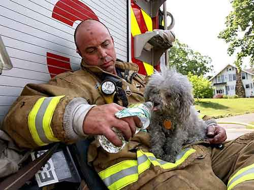 firefighters-rescuing-animals-saving-pets-54-5729f8049e801__605