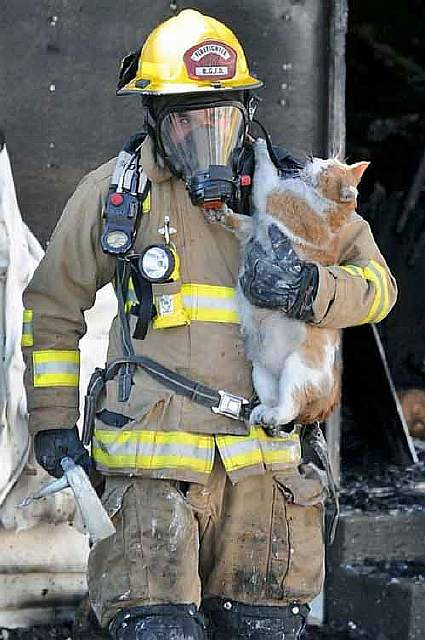 firefighters-rescuing-animals-saving-pets-6-5729a90218054__605