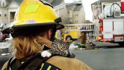 firefighters-rescuing-animals-saving-pets