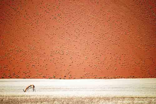 national-geographic-travel-photographer-of-the-year-contest-2016-78-572c4631b8b3f__880
