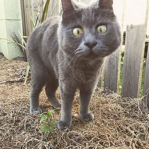 surprised-cat-hydrocephalus-kevin-theadventuresofkev5