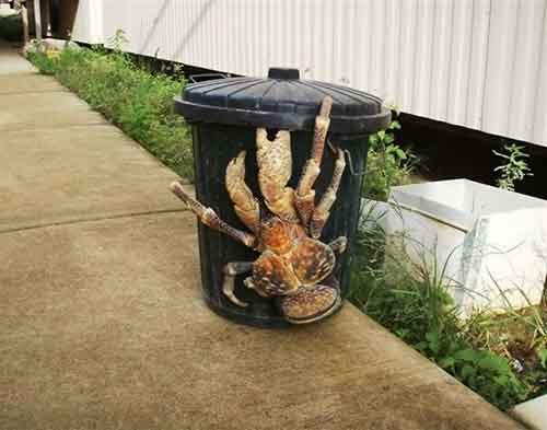 8-coconut-crab-610x480