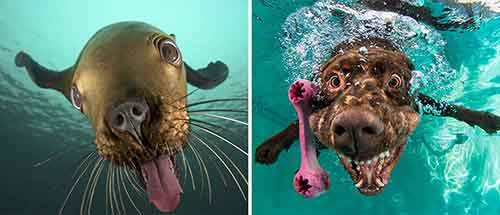 funny-seals-look-like-dogs-109-574d86c9ae0c8__880