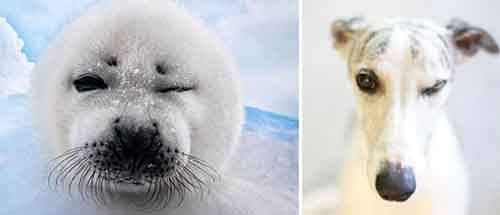 funny-seals-look-like-dogs-110-574d8f5b8e741__880