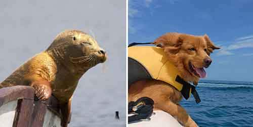 funny-seals-look-like-dogs-112-574d9a16e0f74__880