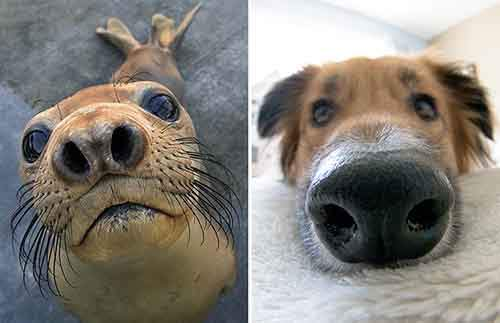 funny-seals-look-like-dogs-21-574ead52ce1e8__880