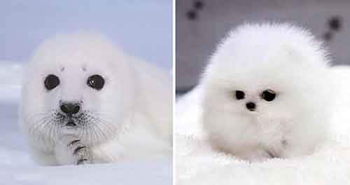 funny-seals-look-like-dogs-22-574eb089a7a66__880