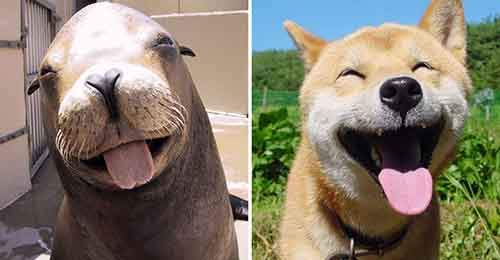 funny-seals-look-like-dogs-23-574d8207639f2__880