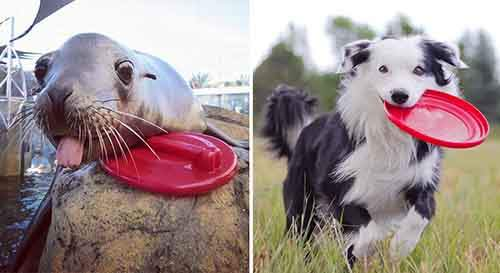 funny-seals-look-like-dogs-24-574ed9afe49d1__880