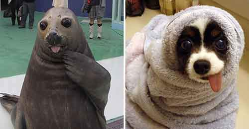 funny-seals-look-like-dogs-25-574d8e380d6ce__880